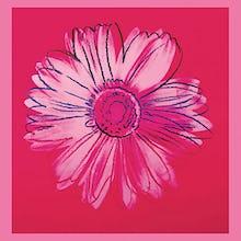 Daisy, c.1982 (crimson & pink)