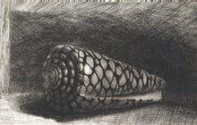 The Shell (Conus Marmoreus), 1650