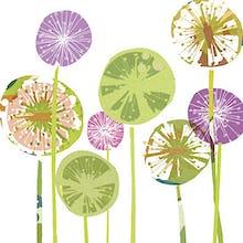 Allium Spheres