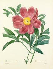 Gentaine sans tige : Gentiana acaulis (mistitled)