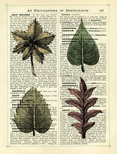 Set of 4 Leaves