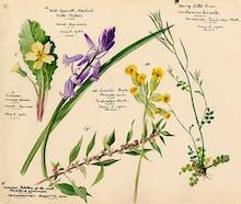 Wildflower Composite XI