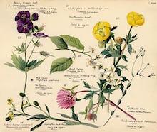 Wildflower Composite XVIII