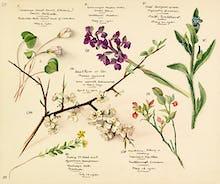 Wildflower composite VII