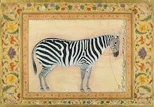 A zebra, 1621