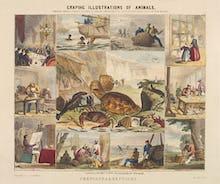 Crustacea & Reptiles