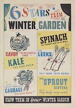Six Stars From the Winter Garden