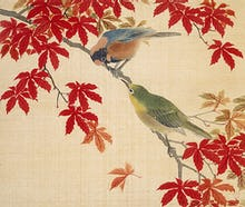Two birds perching on the branches of a Red Maple