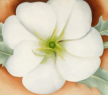 White Flower on Red Earth, No. 1