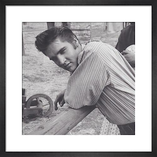 Elvis, 1956 by Celebrity Image