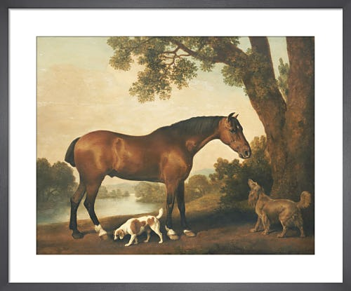 A Bay Hunter, a Springer Spaniel and a Sussex Spaniel, 1782 by George Stubbs