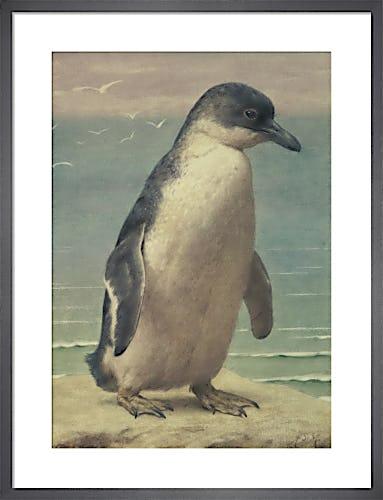Study of a Penguin by Henry Stacy-Marks
