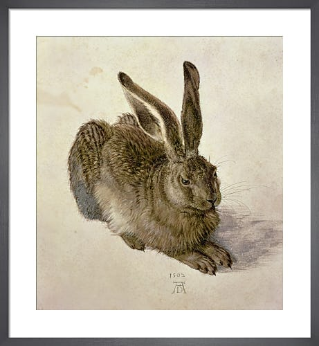Young Hare, 1502 by Albrecht Dürer