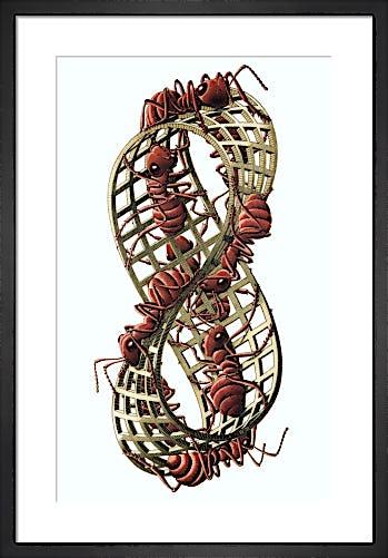Mobius Strip II by M.C. Escher
