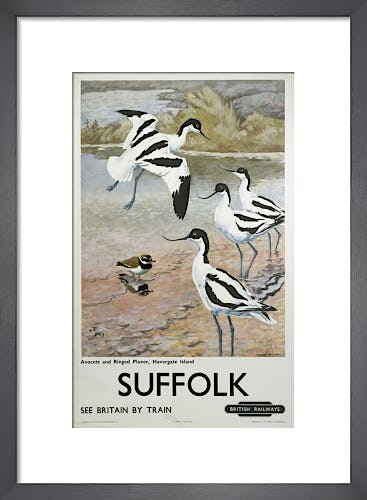 Suffolk - Avocets and Ringed Plover by Anonymous