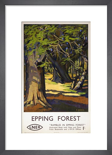 Rambles in Epping Forest by Anonymous