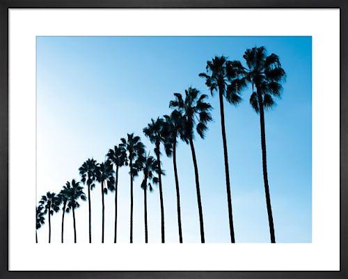 La Jolla Palms by Jenny Kraft