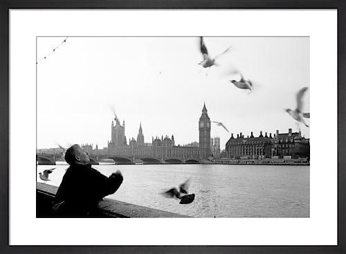The gull feeder, River Thames by Niki Gorick