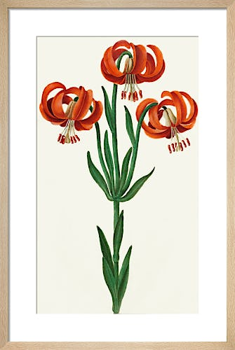 Page 17 from Royal Horticultural Society (RHS)