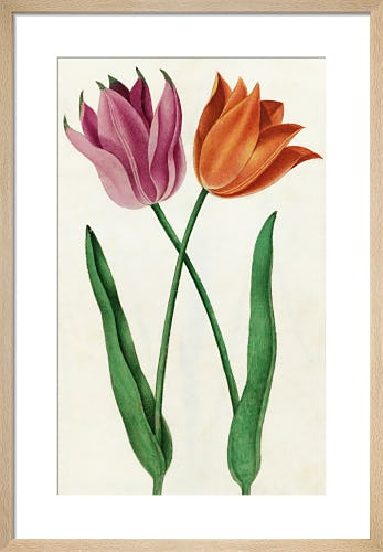 Page 27 from Royal Horticultural Society (RHS)