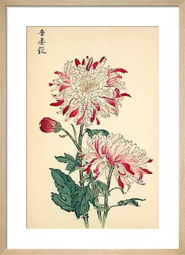 'Azuma Shibori' Chrysanthemum by Keikwa Hasegawa