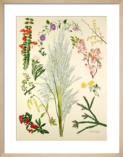 Plate 7 by Cynthia Newsome-Taylor
