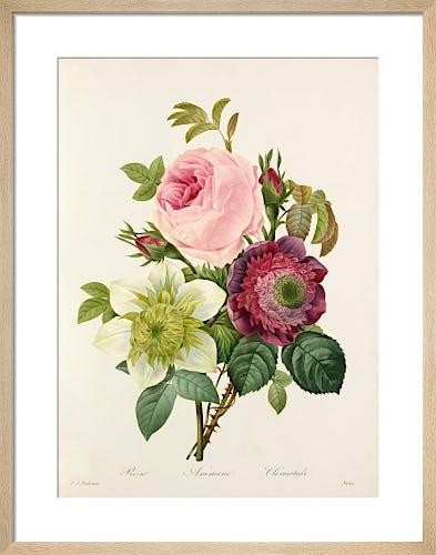 Plate 127 by Pierre Joseph Celestin Redouté
