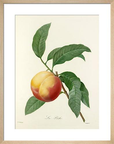 La Pêche by Pierre Joseph Celestin Redouté
