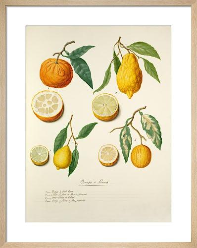 Oranges et Limons by Pierre Francois Ledoulx