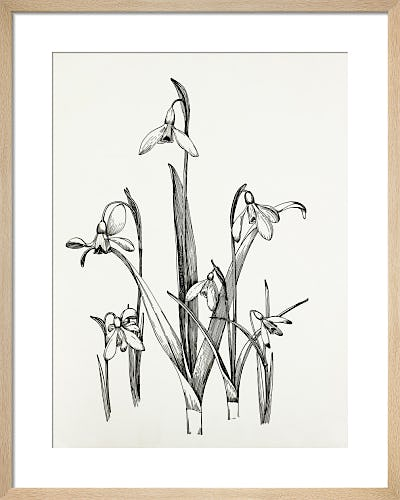 Galanthus Varieties by Graham Stuart Thomas
