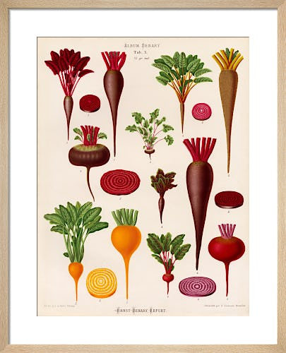 Beetroot Tab X by Ernst Benary