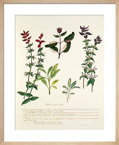 Herbs Plate I by Pierre Francois Ledoulx