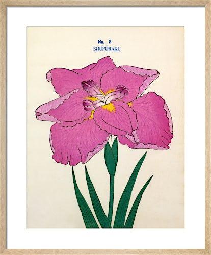 No. 8 Shufuraku by The Yokohama Nursery Co Ltd