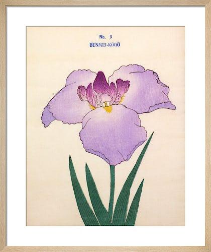 Plate 9 by The Yokohama Nursery Co Ltd