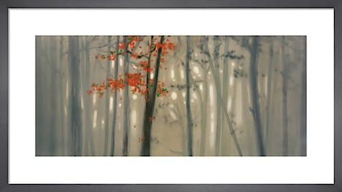 Fall Foliage by Seth Garrett