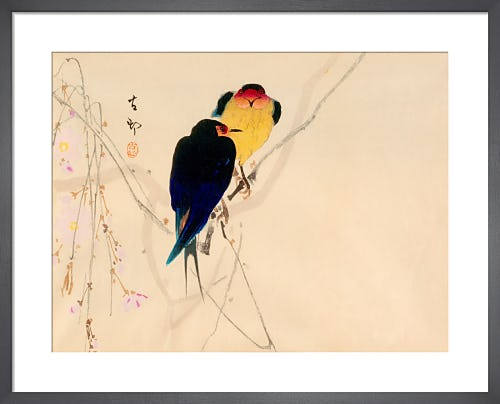 Swallows with Blossom from Royal Horticultural Society (RHS)