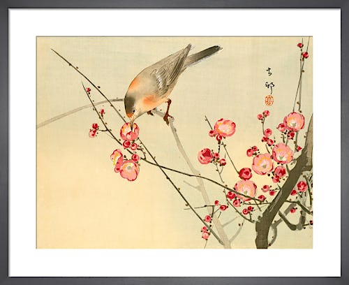 Prunus with White Eye by Anonymous Chinese Artist