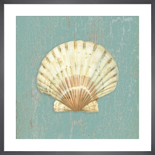 Scallop Shell by Lisa Danielle