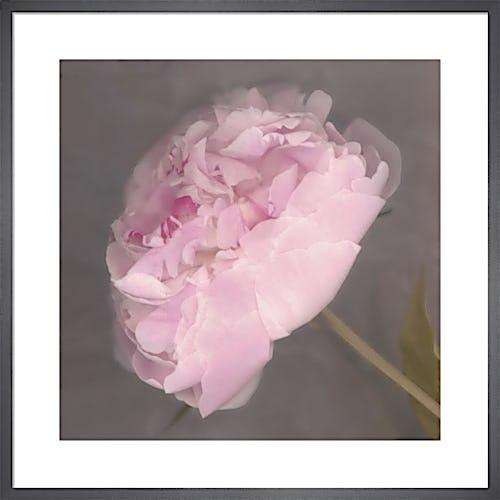 Fleur by Erin Clark