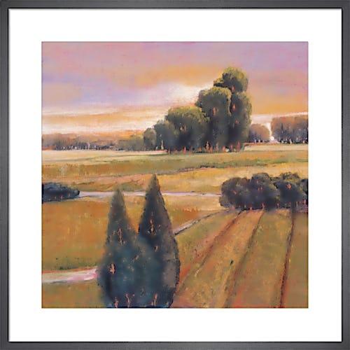 Summer Cypress by Adina Langford