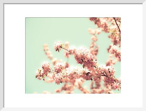 May Flowers by Robert Cadloff