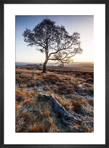Lone Tree, Derbyshire by Doug Chinnery