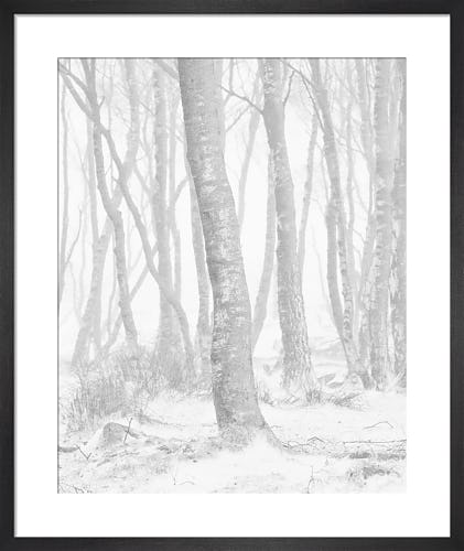 Woodland Blizzard by Doug Chinnery