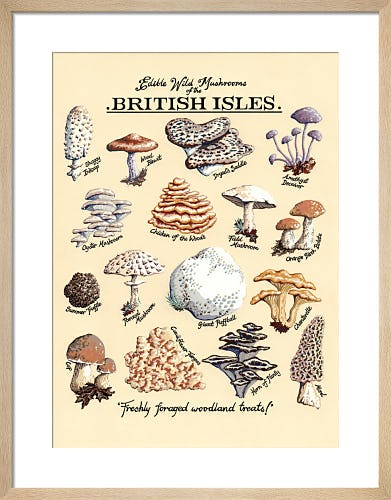 Edible Wild Mushrooms by Kelly Hall
