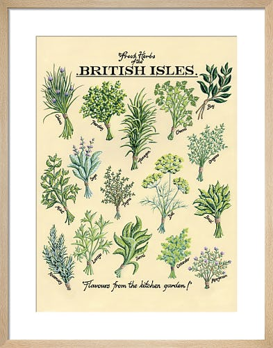 Fresh Herbs by Kelly Hall