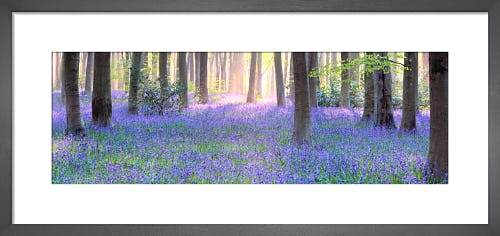 Bluebell Dawn by Doug Chinnery