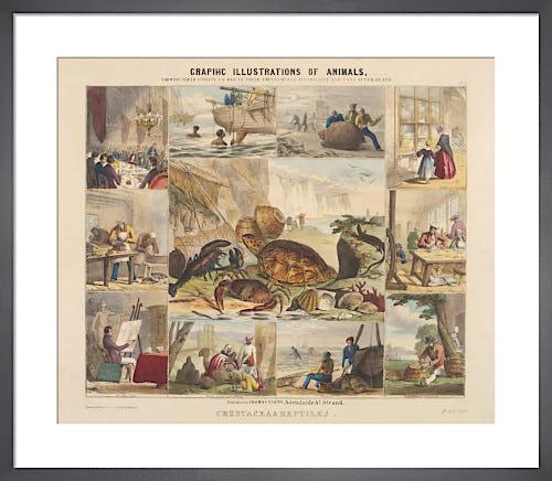 Crustacea & Reptiles by Benjamin Waterhouse Hawkins