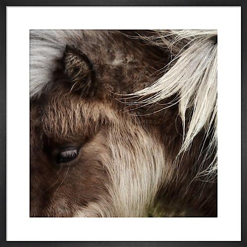 Pony Study I by Chris Tancock