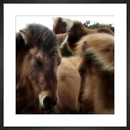 Pony Study II by Chris Tancock