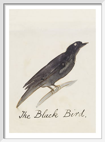 The Black Bird by Edward Lear